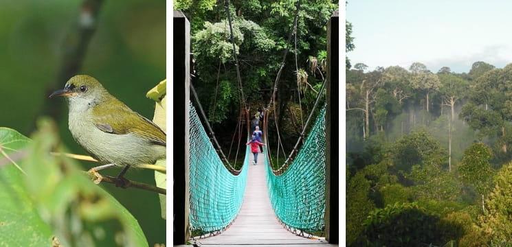 rainforest discovery centre sepilok sabah