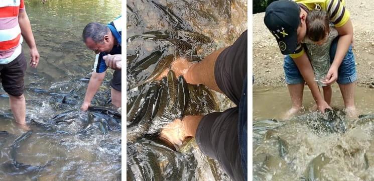 spa ikan sungai moroli sabah