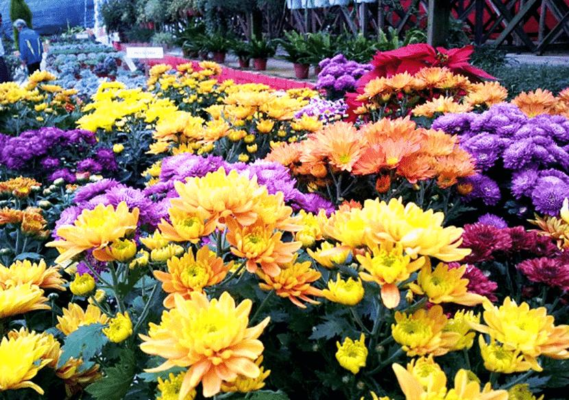 ladang bunga cameron highland best