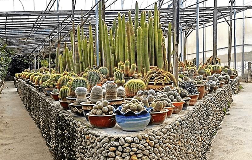 ladang kaktus cameron highland
