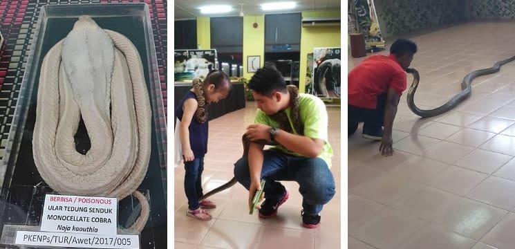 taman ular & reptilia perlis