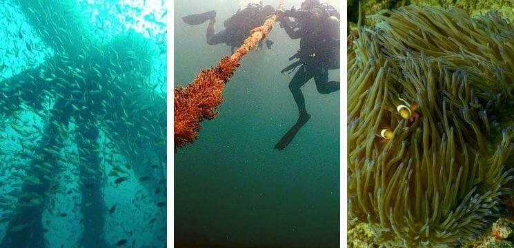 scuba diving in miri sarawak