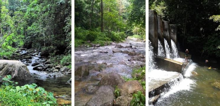 hutan air terjun tupah