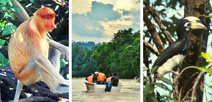 kinabatangan river cruise in sandakan sabah