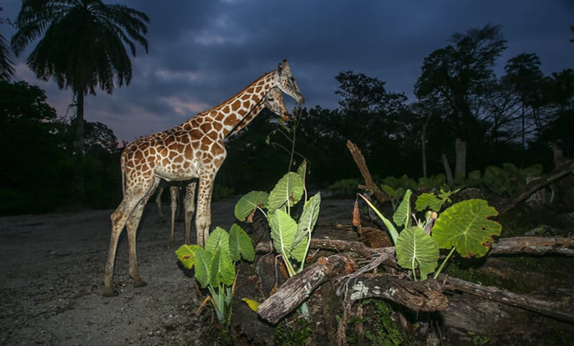 harga tiket night safari taiping