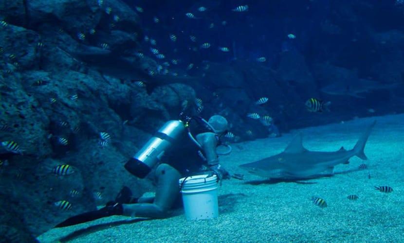 menyelam dengan ikan jerung