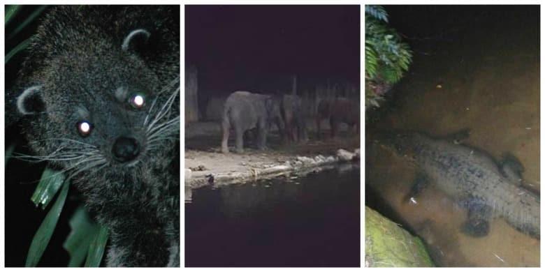 night safari zoo taiping perak