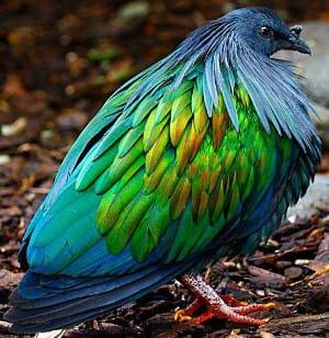 taman burung labun island
