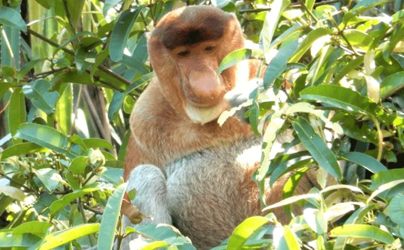 taman negara bako sarawak best