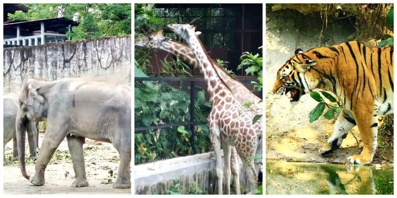 zoo taiping aktiviti best di perak