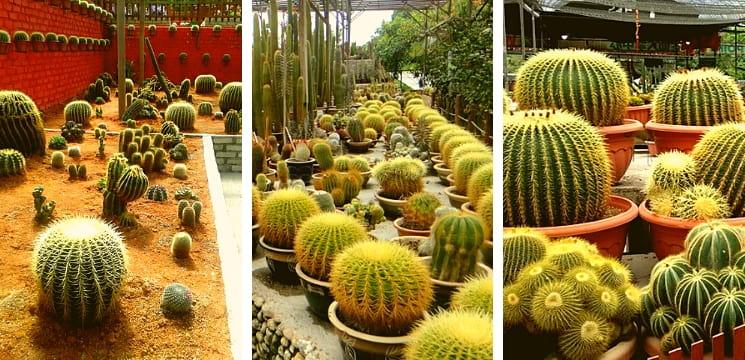 cactus valley brinchang cameron highland