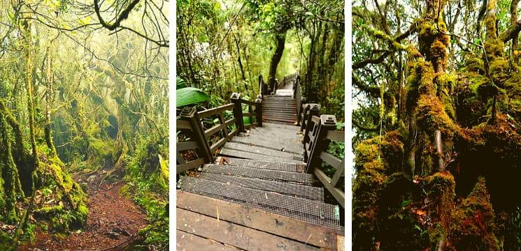 mossy forest gunung brinchang cameron