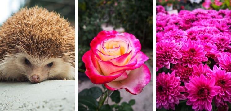 rose orchid garden cameron highland