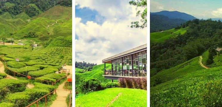 boh tea garden ringlet habu