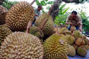 buah durian hulu langat