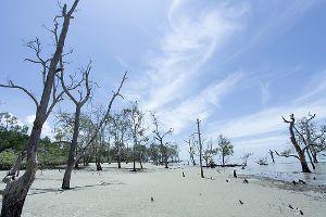 pantai kelanang banting selangor