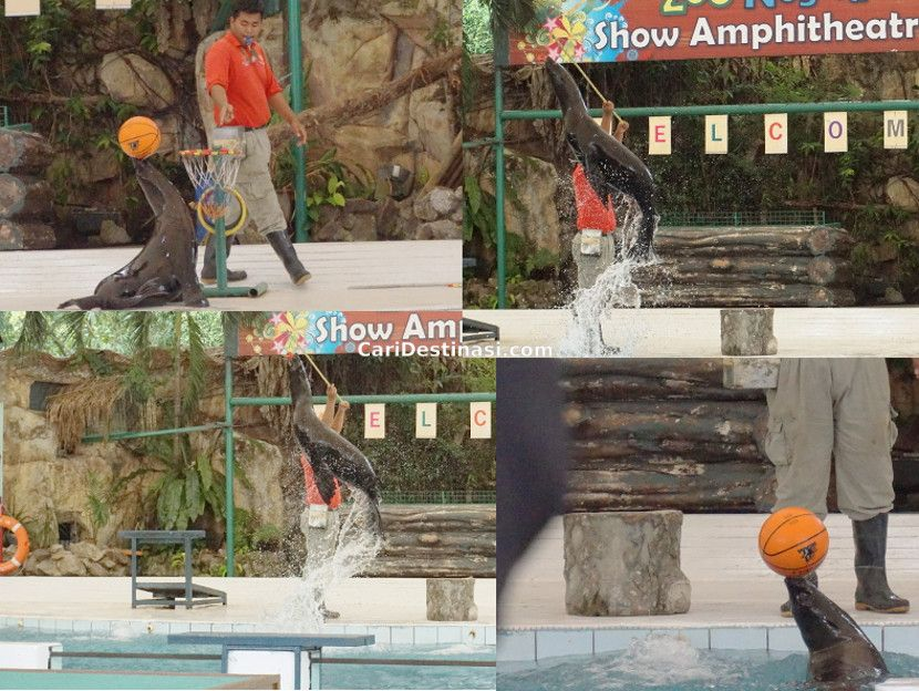 aktiviti menarik zoo negara