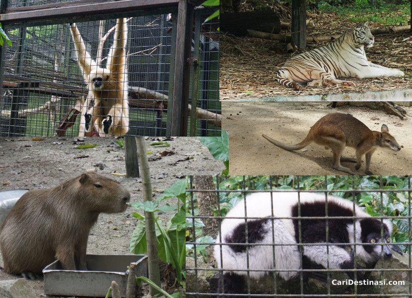 binatang menarik zoo negara