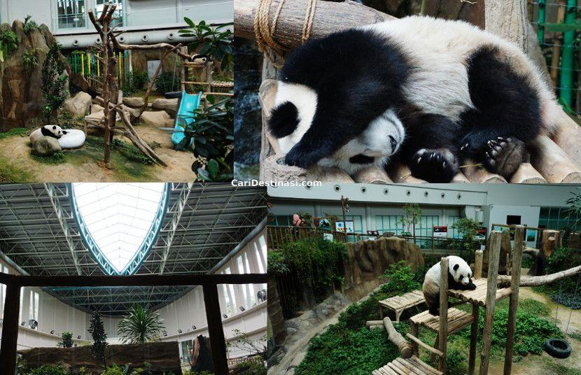 harga tiket beruang panda zoo negara