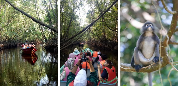 mangrove tour sungai cherating