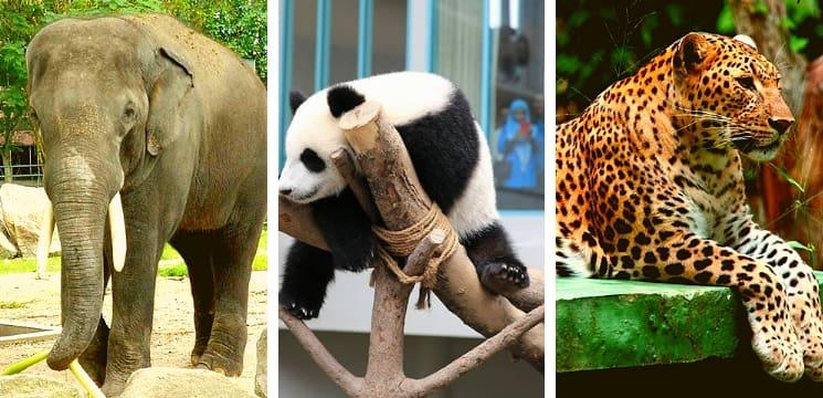 zoo negara ampang selangor