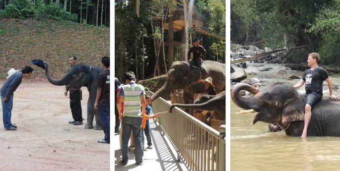 kenyir elephant village terengganu