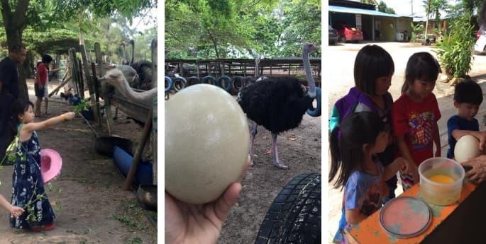 desaru ostrich farm johor