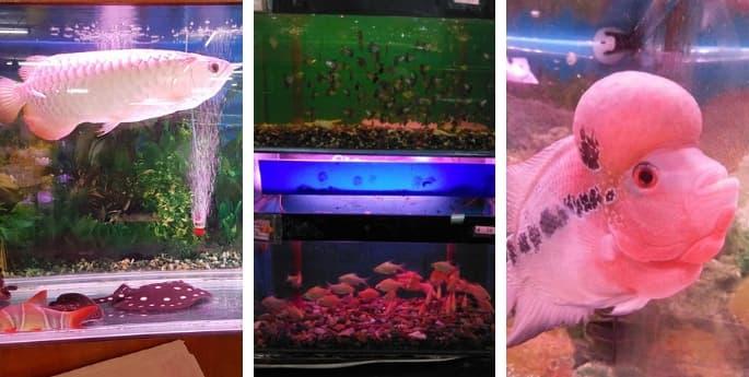fish farm nanyang johor