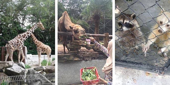 zoo johor safari