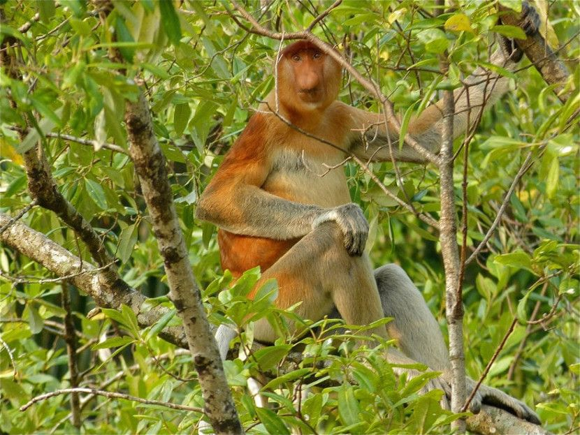 taman negara menarik di malaysia