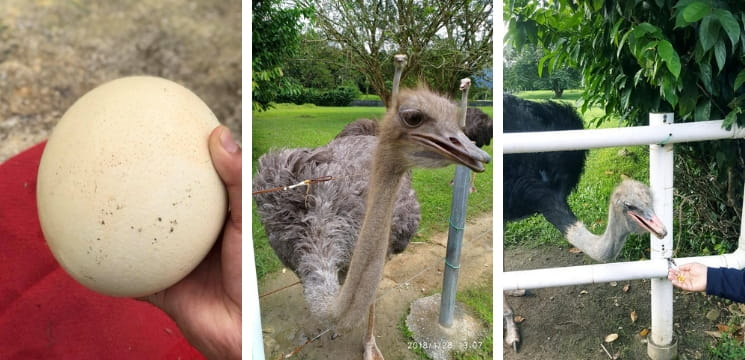 jelita ostrich show farm seremban