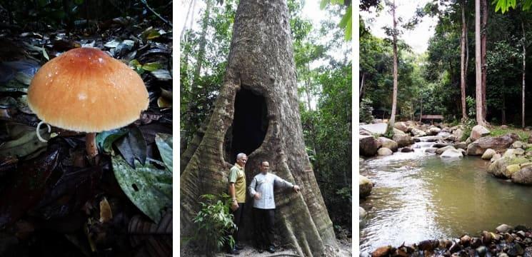hutan negeri sungai menyala pd