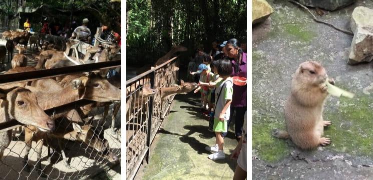 zoo di pahang menarik