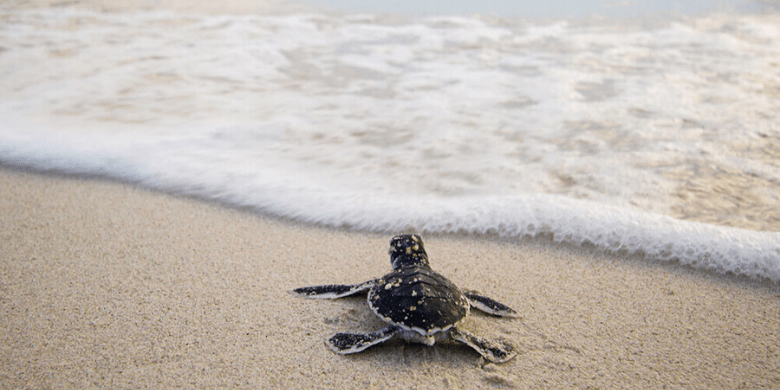 Pulau Lang Tengah - Tempat Penetasan Penyu (Turtle Hatchery)