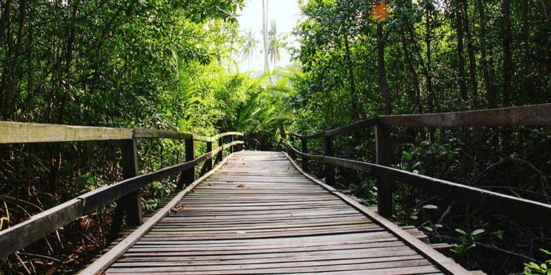 Pulau Sibu - Jelajah Hutan (Jungle Trekking)