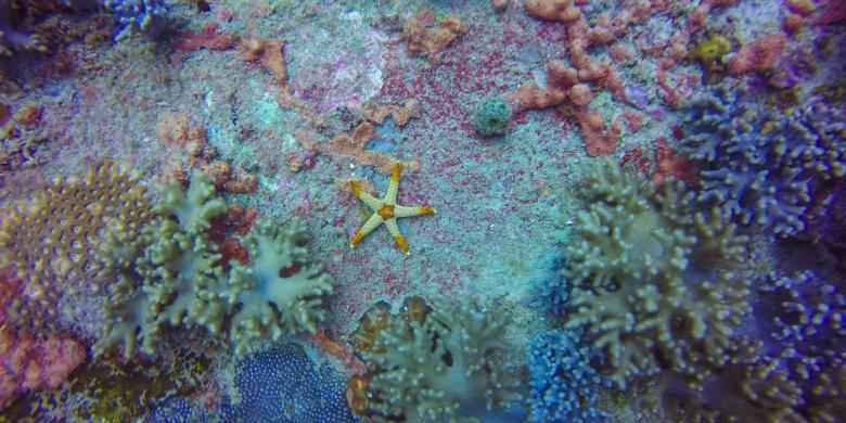 Pulau Sibu - Menyelam Scuba (Scuba Diving)