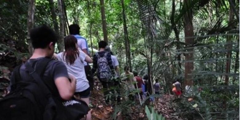 Pulau Tinggi - Jelajah hutan (Jungle Trekking)