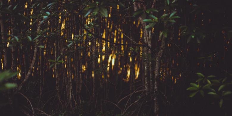 Melihat kelip-kelip di hutan bakau pada waktu malam