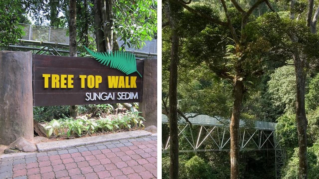 canopy walk kedah