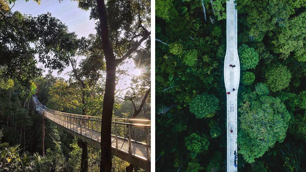 canopy walk penang