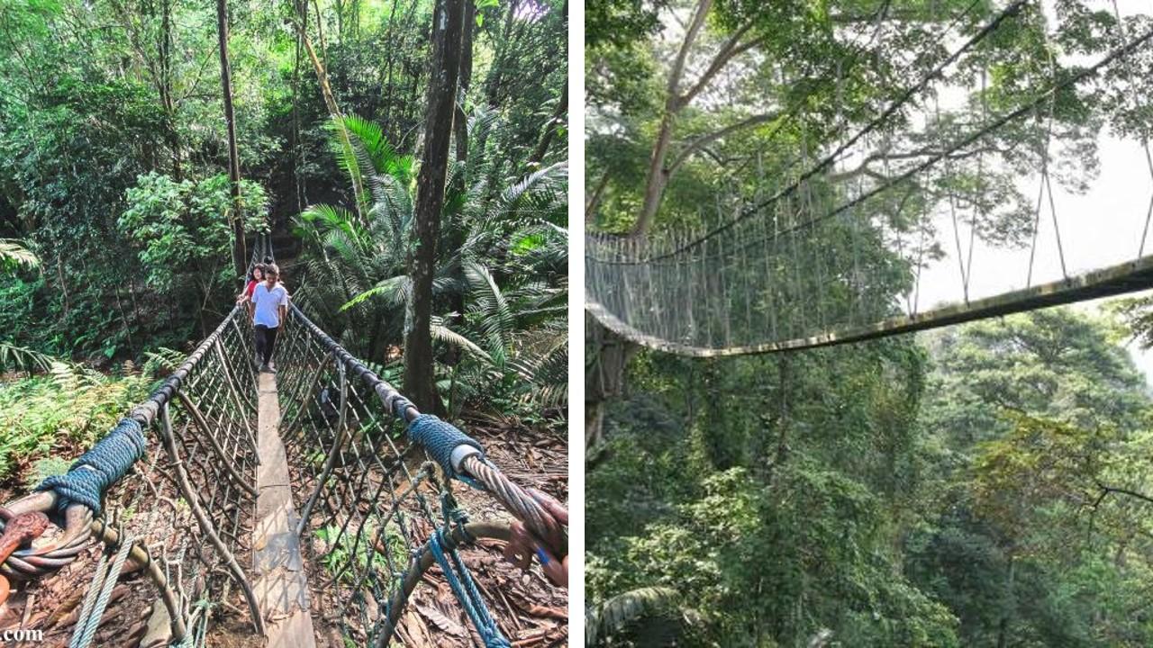 canopy walk petaling jaya