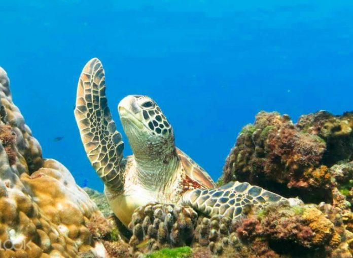 pulau terbaik scuba diving