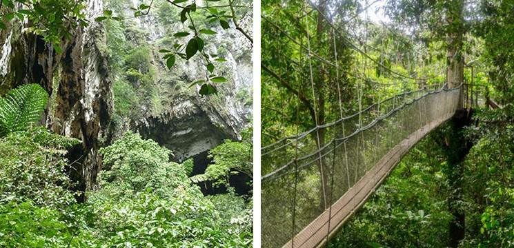 Mulu Canopy Skywalk