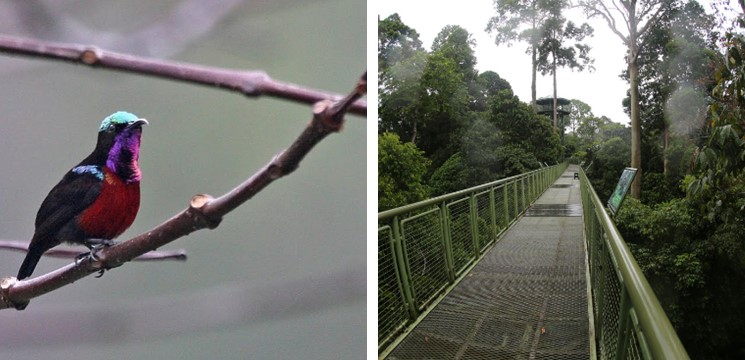 Canopy Walk RDC