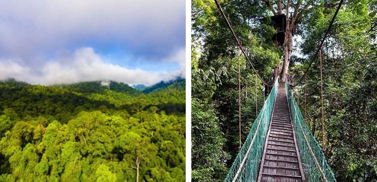 Maliau Basin Canopy Walk