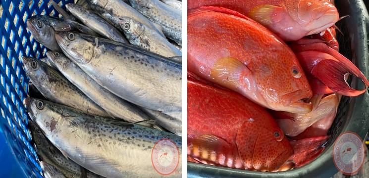 pasar ikan sekinchan